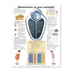 Maintaining a Healthy Weight Anatomical Chart in Spanish (Manteniendo un peso saludable)