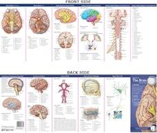 Anatomical Chart Company