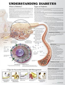 Understanding Diabetes Anatomical Chart