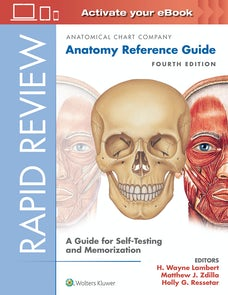 Rapid Review: Anatomy Reference Guide