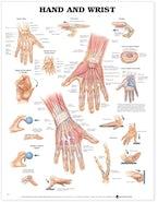 Hand and Wrist Anatomical Chart