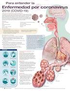 Para entender la Enfermedad por coronavirus 2019 (COVID-19)